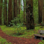 Explore Hendy Woods State Park
